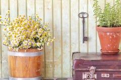 Stillleben mit Kräutern und Blumen Stockfotos