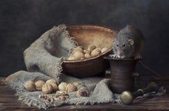 Stillleben mit Nüssen und einer lebenden dekorativen Ratte Stockfoto