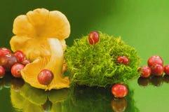Stillleben mit Pilzen und Beeren und Moos Lizenzfreie Stockfotografie