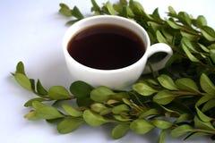 Stillleben mit Tasse Kaffee und Zweigen des Buchsbaumes Lizenzfreies Stockfoto