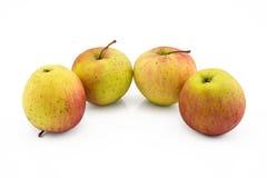 Stillleben mit vier Äpfeln auf weißem Hintergrund Lizenzfreie Stockfotos