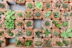 Stillleben-natürliche verschiedene Kaktuspflanzen auf Weinlese Grey Backgro Stockfotografie