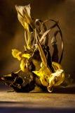 Stillleben verwelkte Blumen in den braunen Tönen Stockbild
