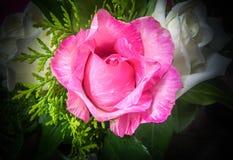 Stillleben verzierte die rosa und weißen Rosen Lizenzfreies Stockfoto