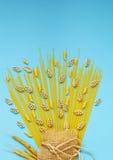 Stillleben von anderen Teigwaren, Bioprodukt Stockfotos