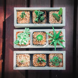 Stillleben von drei Kaktuspflanzen auf Weinlese-hölzernem Hintergrund Tex Stockbild