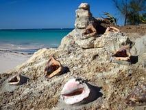 Stillleben von Muscheln und von Koralle im Stein Stockbild