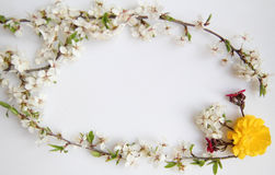Stilllebenanordnung für Blumen Stockfotografie