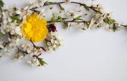 Stilllebenanordnung für Blumen Stockfoto