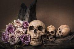 Stilllebenphotographie mit dem menschlichen Schädel und den Rosen Lizenzfreies Stockfoto