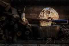 Stilllebenschädel und -brennholz Stockfotografie