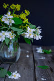 Stilllife card with jasmine flowers in glass jar, separate branches with flowers and petals on the wooden rustic table. Soft selec royalty free stock image