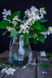 Stilllife card with jasmine flowers in glass jar, separate branches with flowers and petals on the wooden rustic table. Soft selec stock images