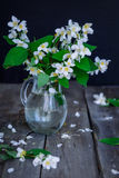 Stilllife card with jasmine flowers in glass jar, separate branches with flowers and petals on the wooden rustic table. Soft selec stock photography