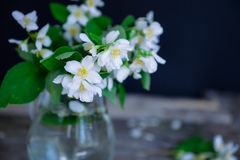 Stilllife card with jasmine flowers in glass jar, separate branches with flowers and petals on the wooden rustic table. Soft selec royalty free stock images
