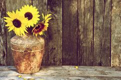 Stilllife de tournesols. Images libres de droits