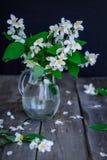Stilllife-Karte mit Jasmin blüht im Glasgefäß, in den unterschiedlichen Niederlassungen mit Blumen und in den Blumenblättern auf  Stockfotografie