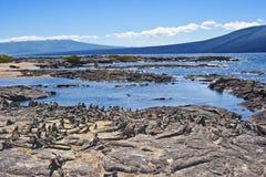 Free Stillness In Galapgos Royalty Free Stock Image - 16567526
