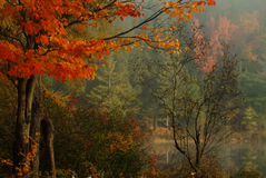 Free Stillness Of Fall Stock Photo - 164600