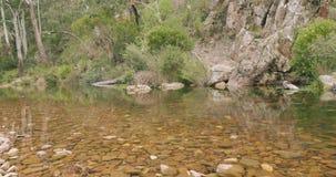 Stillsam buskeflodplats, fortfarande klart vatten, stenig flodsäng, grön skog stock video