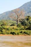 Stillsam flod med det stora trädet Royaltyfri Fotografi