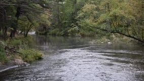 Stillsam flod som flödar till och med kanadensisk skog arkivfilmer