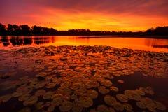 Stillsam Lilypad soluppgång Royaltyfri Bild