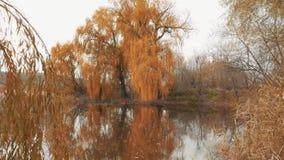 Stillsam plats av sjön i höstdag stock video