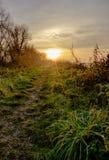 Stillsam plats av vinterinställningssolen som ses i en naturreserv som följer en lerig bana royaltyfri bild