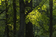 Stillsam plats i skogen Arkivfoto