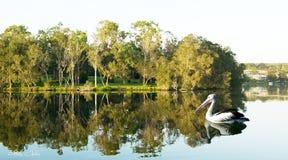 Stillsam plats med gröna träd och vattenreflexioner Arkivbilder
