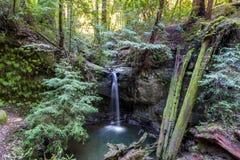 Sempervirens nedgångar i stora handfatredwoodträd delstatspark, Kalifornien Royaltyfria Bilder