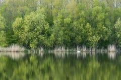 Stillsam sjö med grön trädreflexion Royaltyfri Fotografi