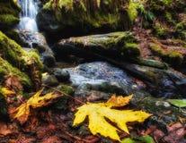 Stillsam vattenfall i höst Arkivbilder