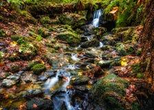 Stillsam vattenfall i höst Arkivfoton