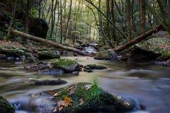 Stillsamma Forest Creek Fotografering för Bildbyråer
