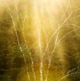 Stillsamma Forest Tree Background Royaltyfri Foto