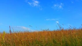 Stillsamt landskap Royaltyfri Fotografi