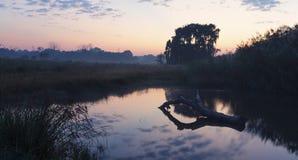 Stillsamt landskap av solnedgången över en fördämning med ett träd royaltyfria bilder
