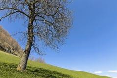 Stillsamt landskap med ett kalt träd i tidig vår royaltyfri foto