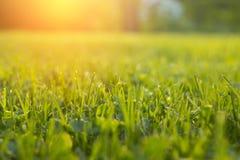 Stillsamt nytt gräs på gräsmatta för orange solnedgång royaltyfri foto