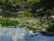 Stillsamt reflekterande damm med Lotus Leaves & naturligt harmoniskt landskap royaltyfria bilder