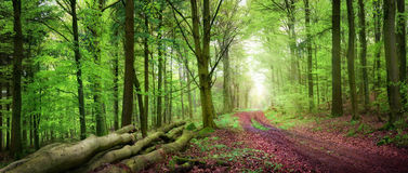 Stillsamt skoglandskap arkivbilder