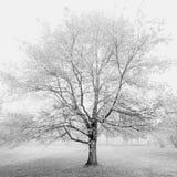 Stillsamt träd Fotografering för Bildbyråer