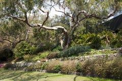 Stillsamt trädgårds- landskap arkivfoto