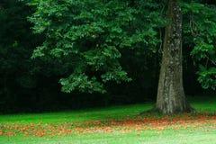 Stillsamt träskogträd som blommar kronbladnedgången och sprider runt om den mjuka skogen som malas i stillsam morgon royaltyfri foto