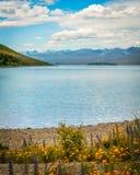 Stillsamt vatten av sjön Tekapo i sommar arkivfoto