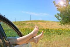 Stillstehen auf einem Gebiet von Sonnenblumen Lizenzfreies Stockfoto