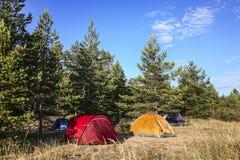 Stillstehen in den Zelten in einem Kiefernwald Stockfoto