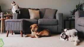 Stillstehen mit 3 Haustieren lizenzfreies stockfoto